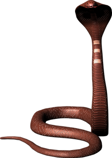 Free snake png images.