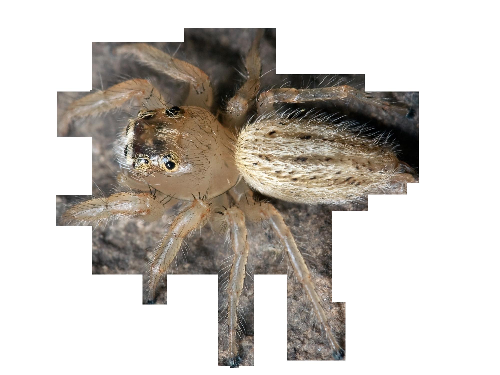 spider-67761_Clip