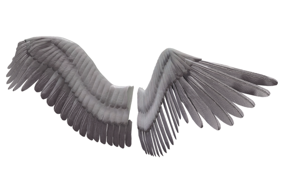 Wing-png-10