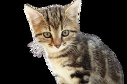 young-cat-995956_Clip