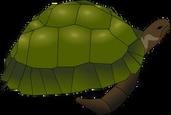 Anonymous_turtle