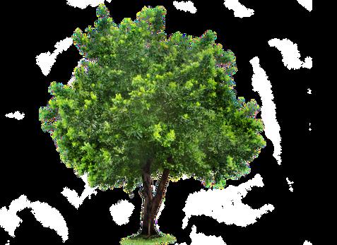 Tree, free PNGs