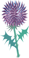 thistle-1293893__340.png
