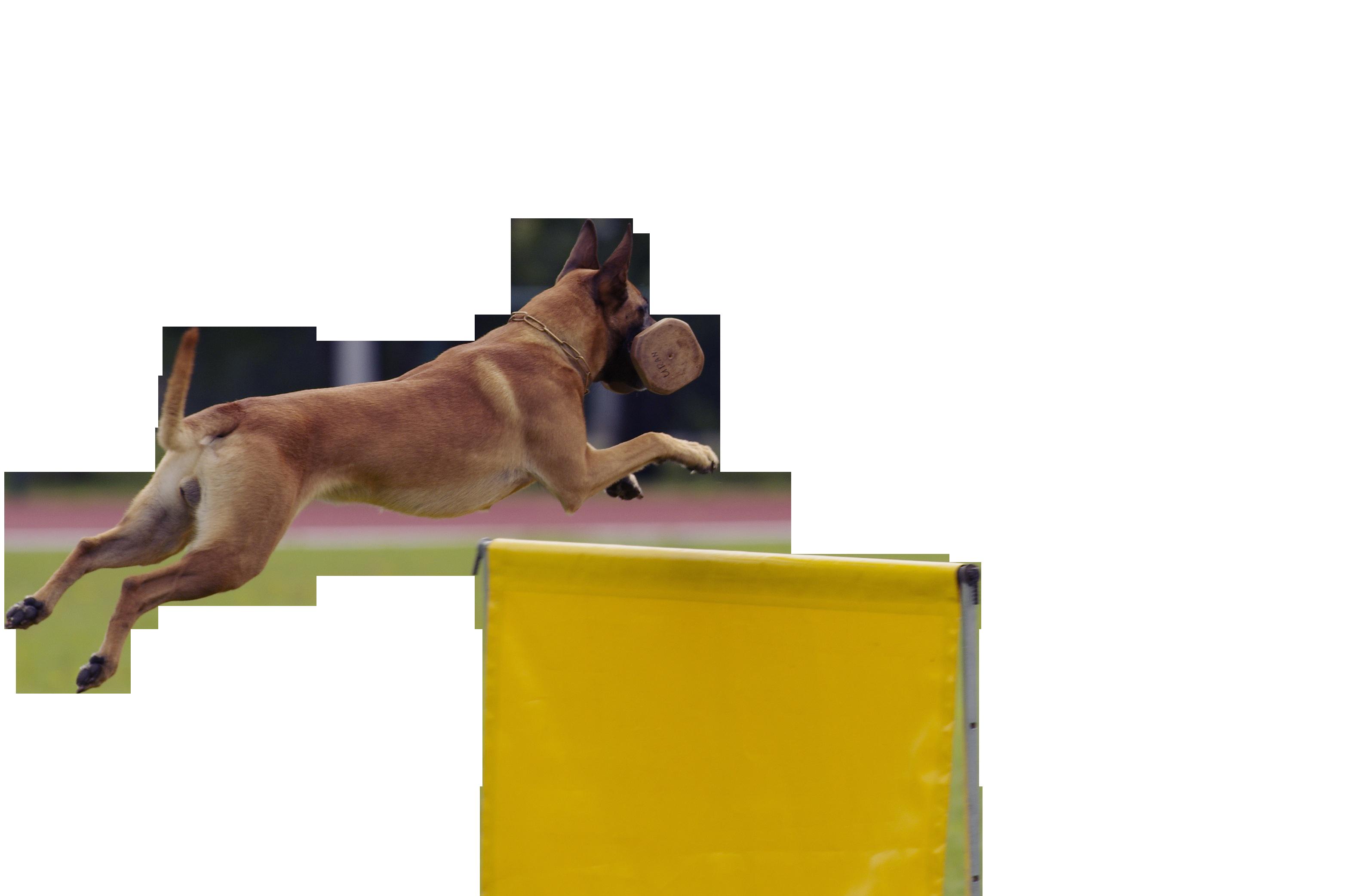 dog-862563_Clip