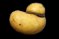 potato-886388_Clip