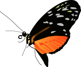 Butterfly_light.png