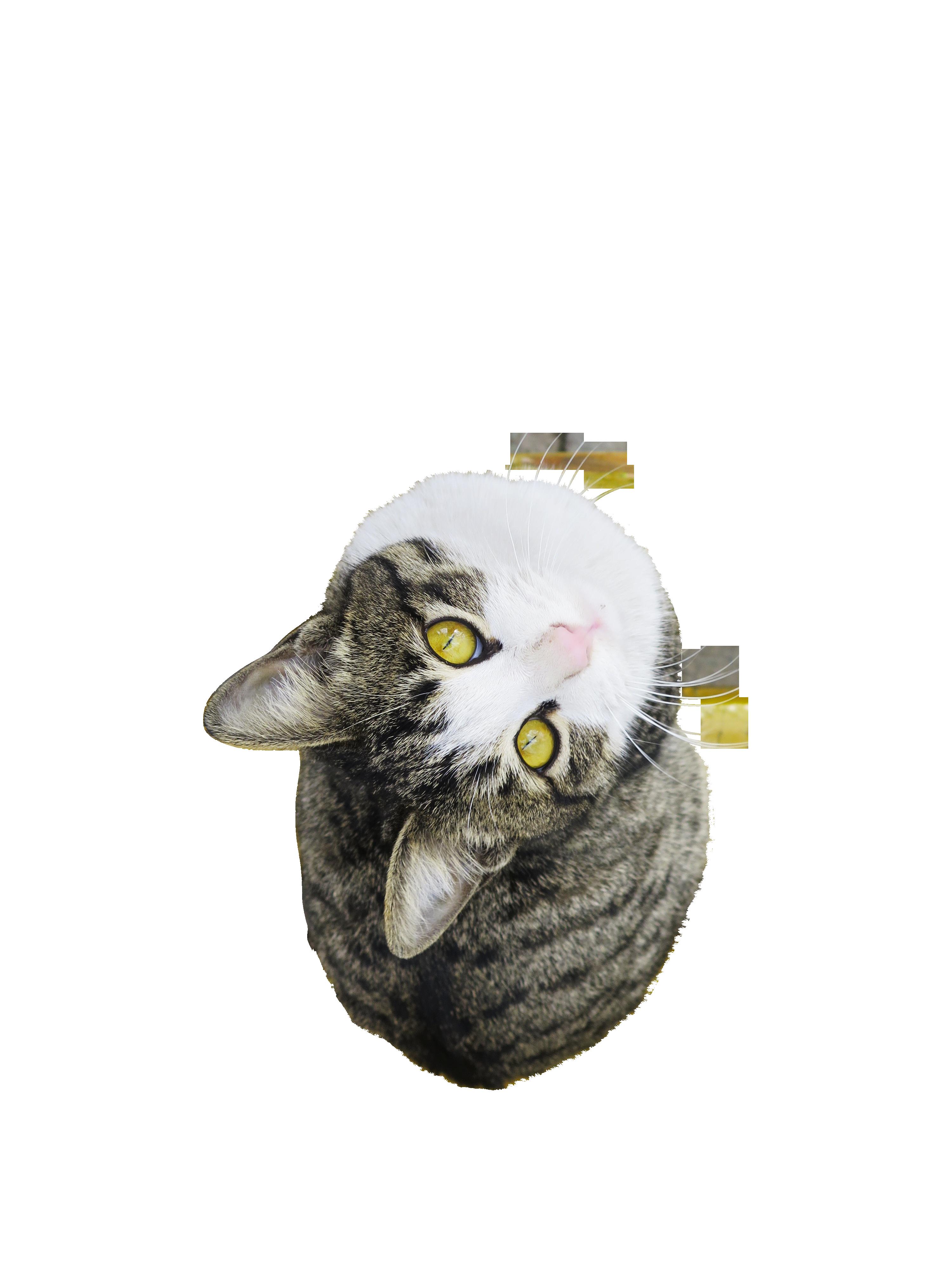 cat-1149044_Clip