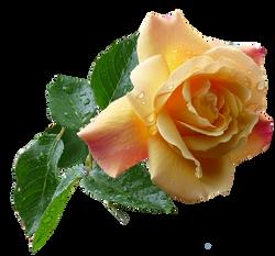 Flower PNG images
