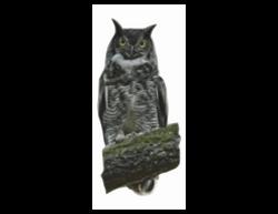 Great_Horned_Owl02