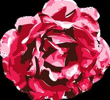 rose-1423681__340.png
