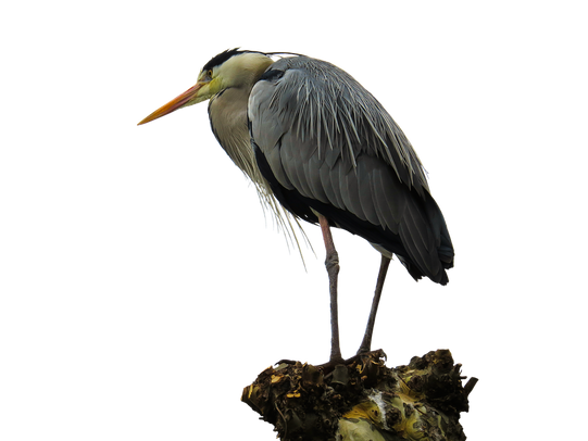 PNG images: bird