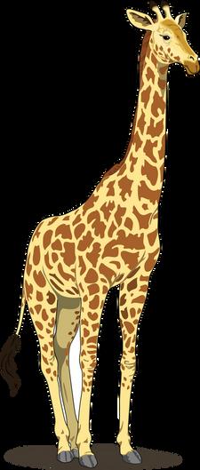 PNG images: Giraffe