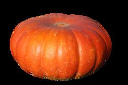 pumpkins-432607_Clip