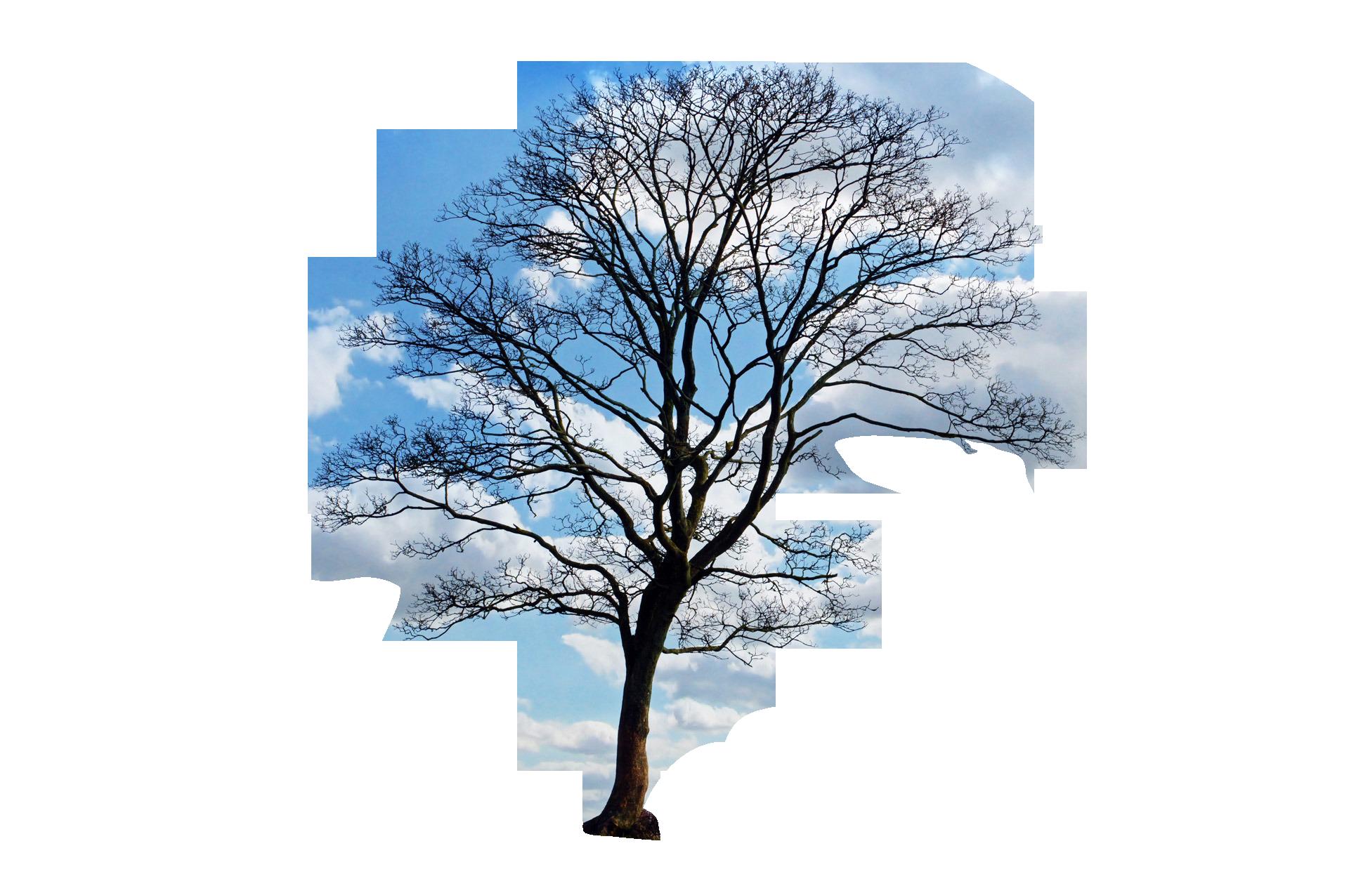 tree-164915_Clip