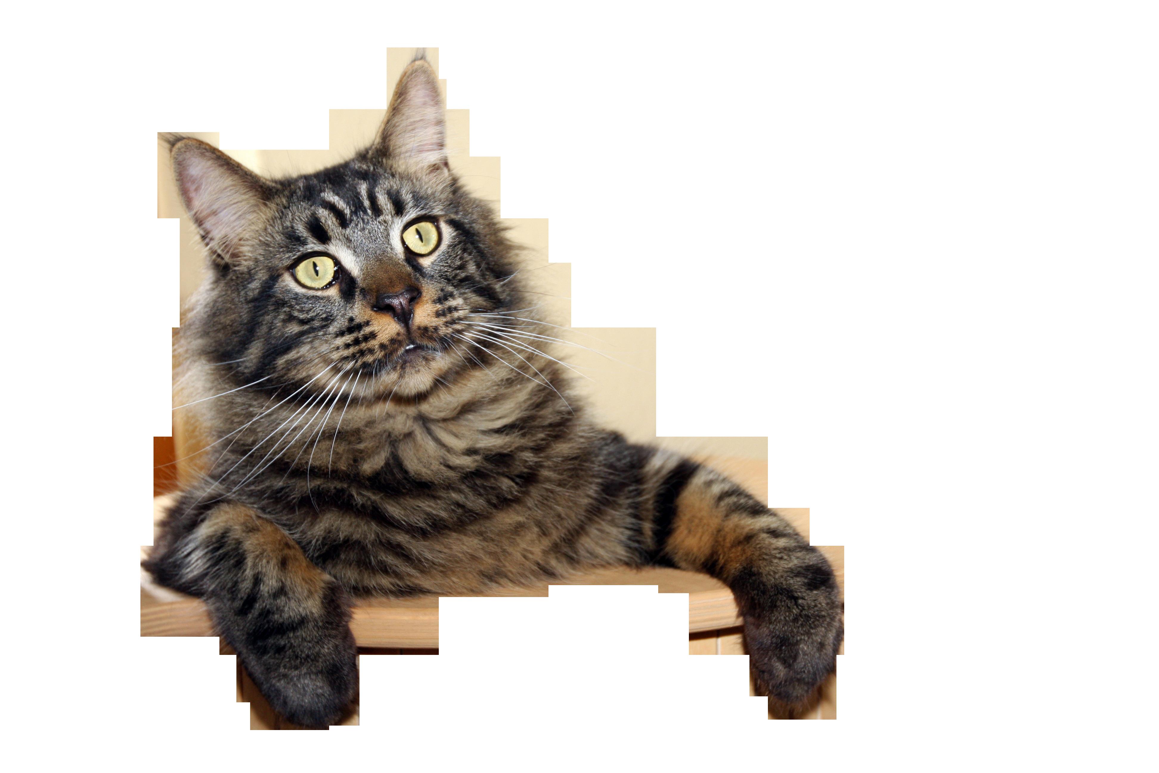 cat-1059663_Clip