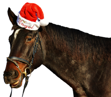 horse-2527321_960_720.png