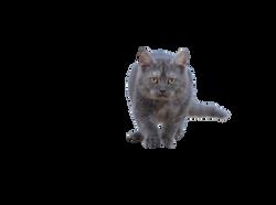 cat-665142_Clip