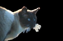 cat-1083393_Clip