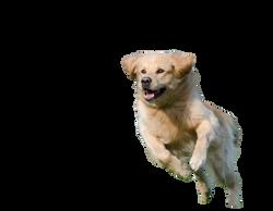 running-dog-750588_Clip