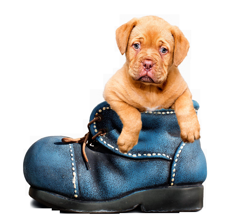 puppy-1154468_Clip