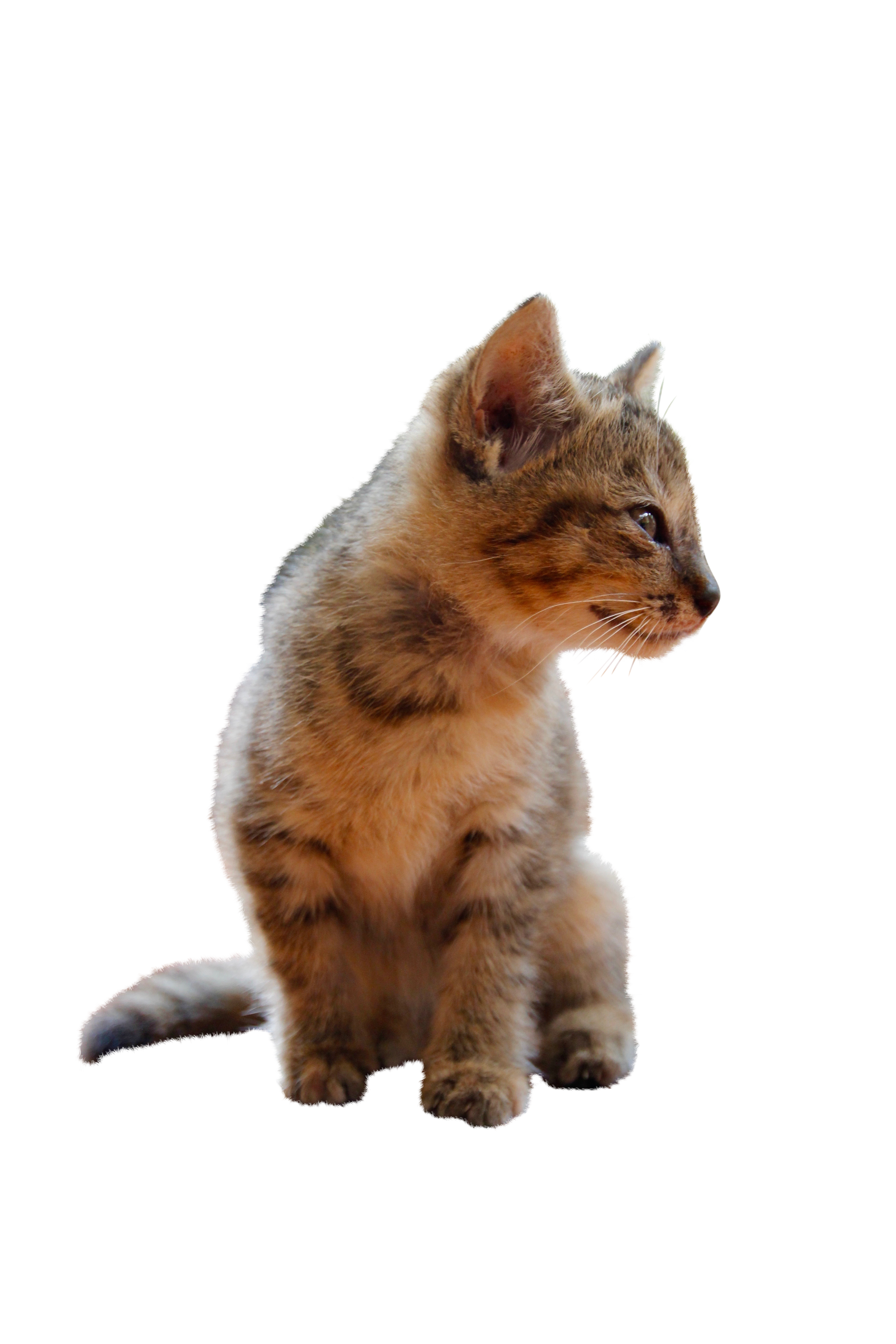 cat-1189822_Clip