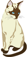 siamese-cat-48032__340.png