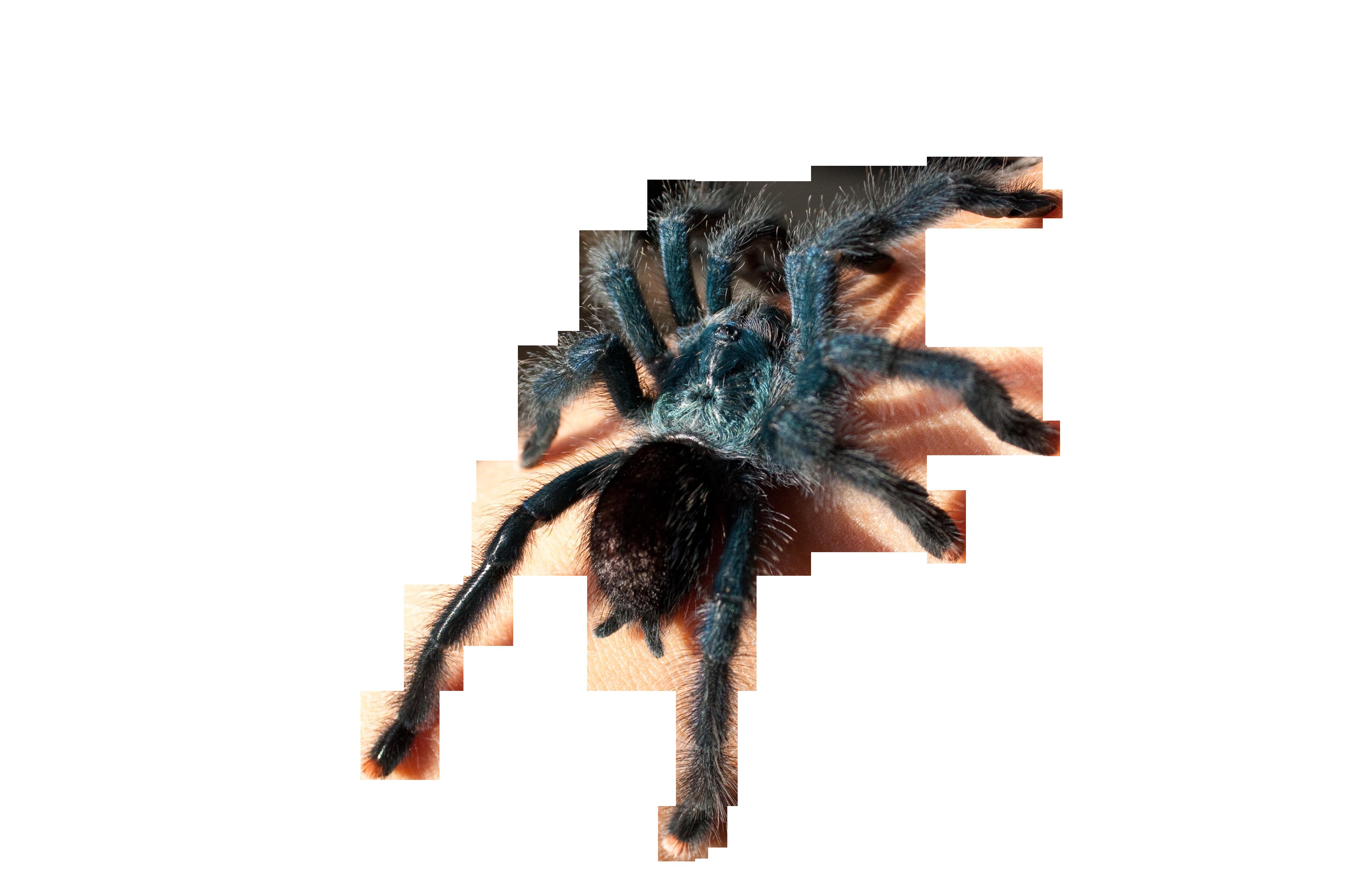 spider-629902_Clip