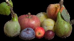 fruit-952427_Clip