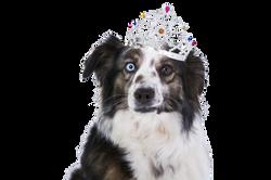 dog-1273056_Clip