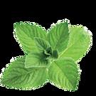 Mint PNG images