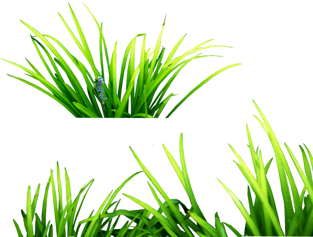 Grass, free PNGs