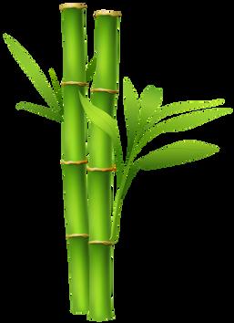 Bamboo (5).png