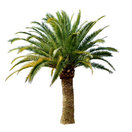 Palm tree, free PNGs