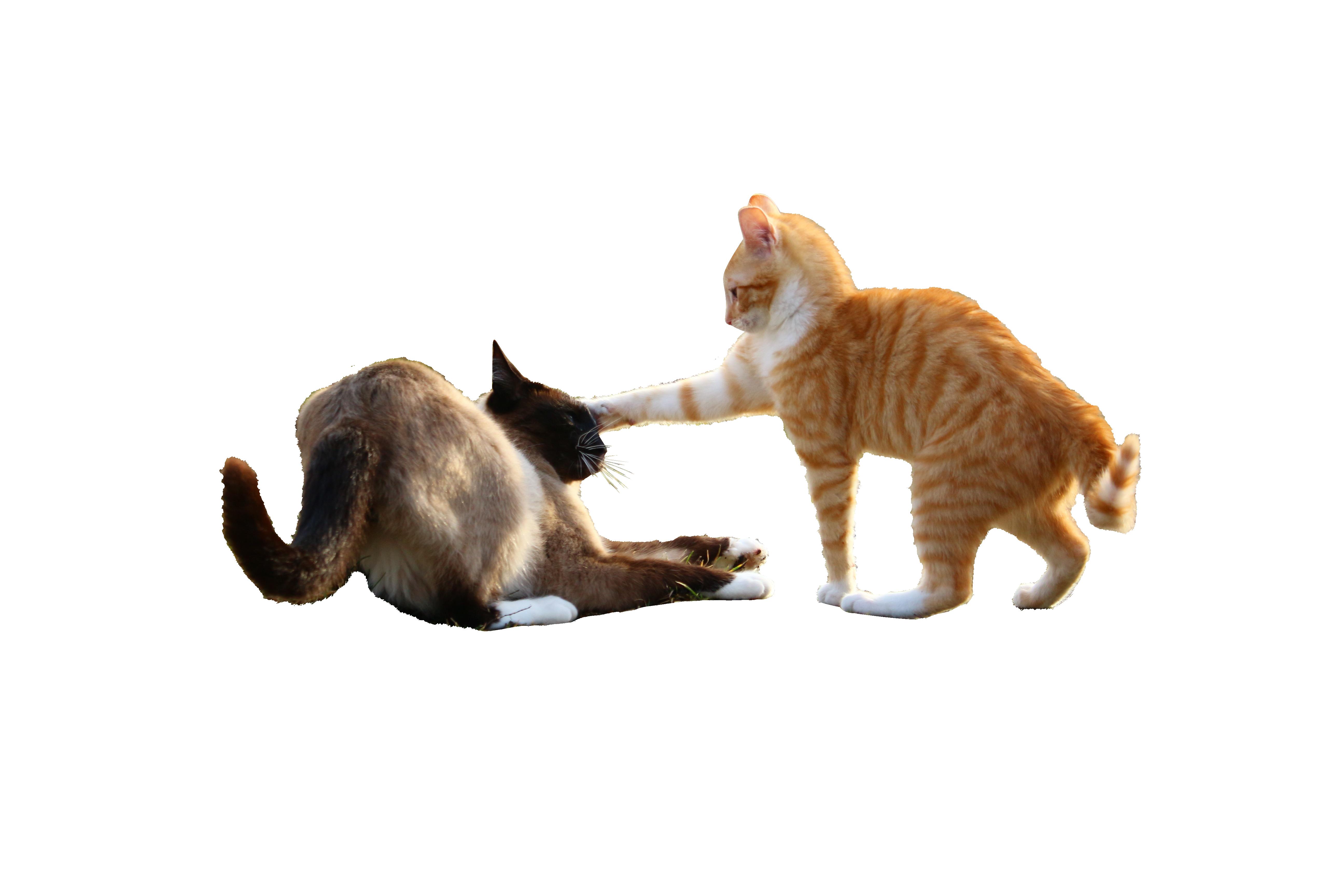 cat-1184762_Clip