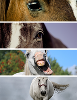 the-horse-1319885__340.png