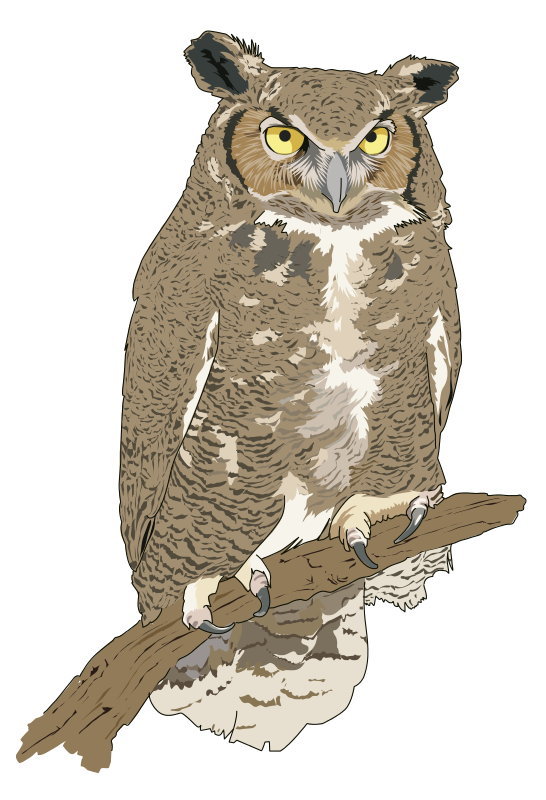 Hibou-Grand-duc-Eagle-Owl-1