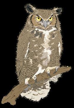 Hibou-Grand-duc-Eagle-Owl-1