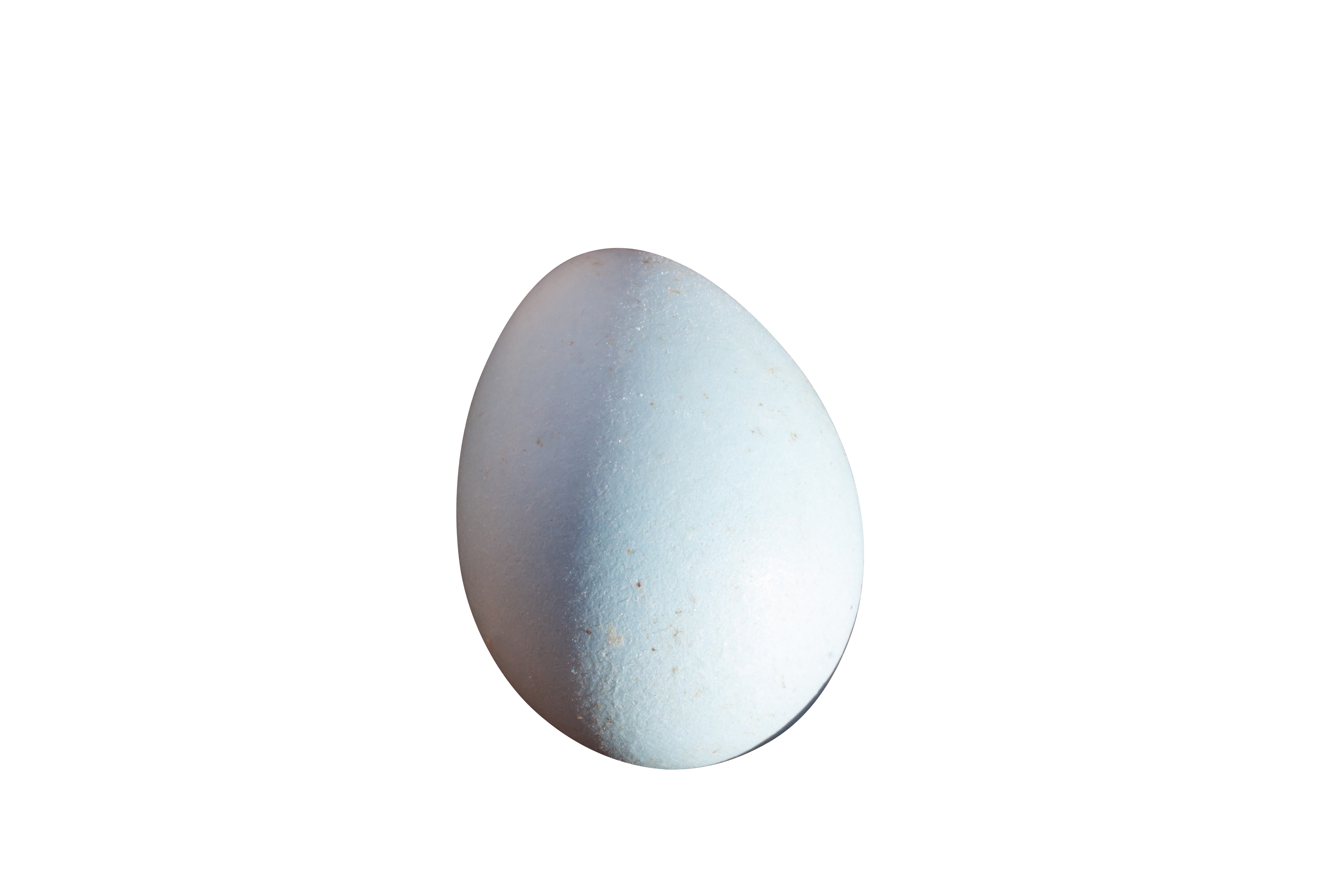 egg-1151755_Clip