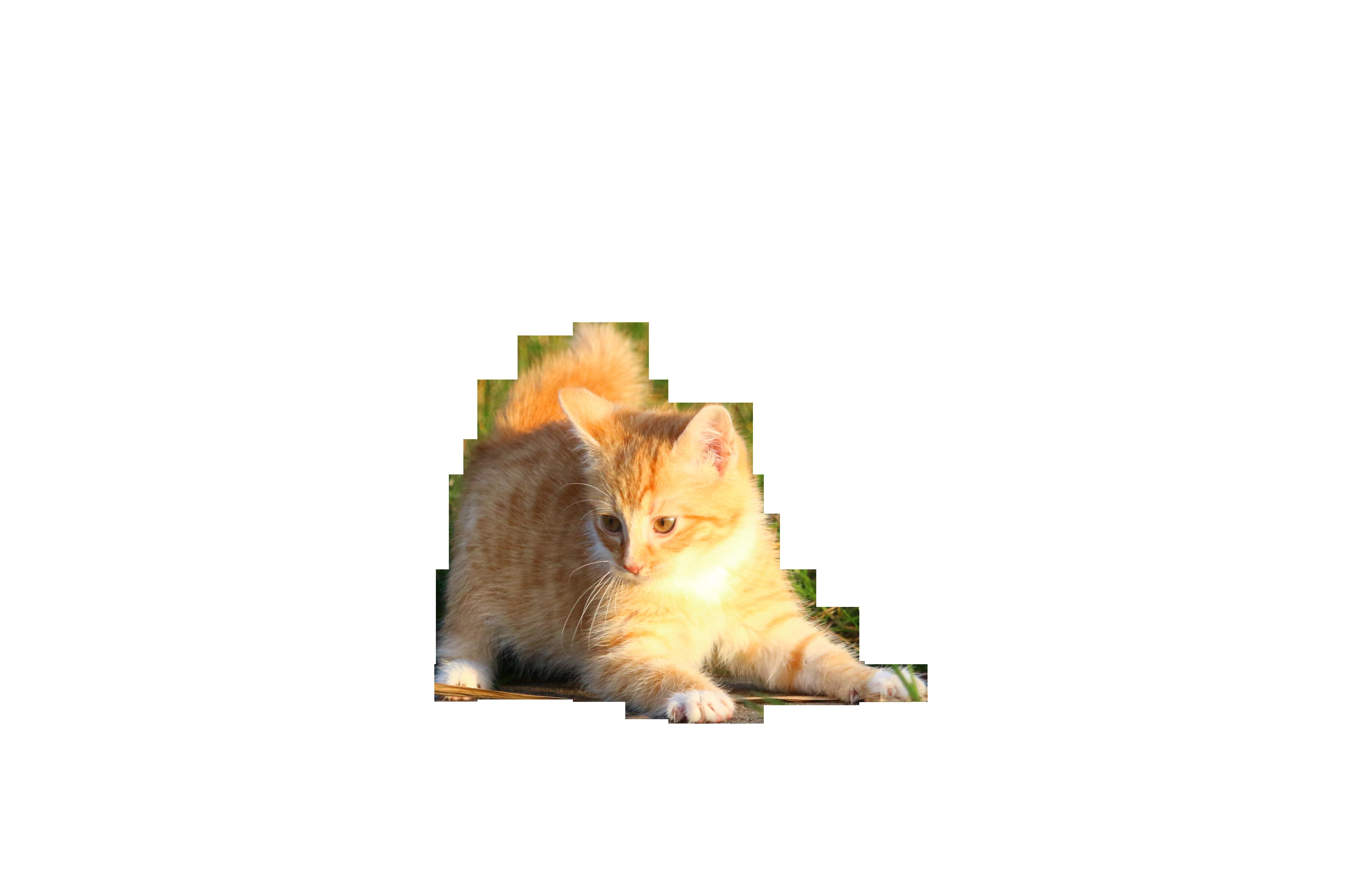 cat-1074840_Clip