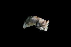 cat-913059_Clip