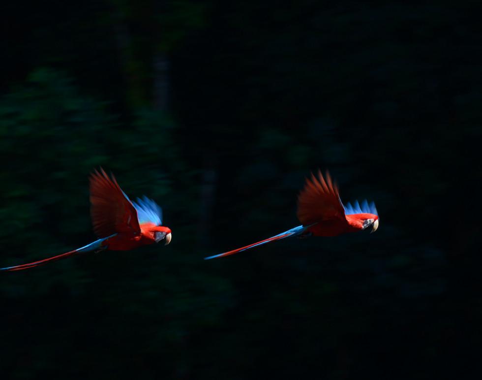 Shem Images Pangaea