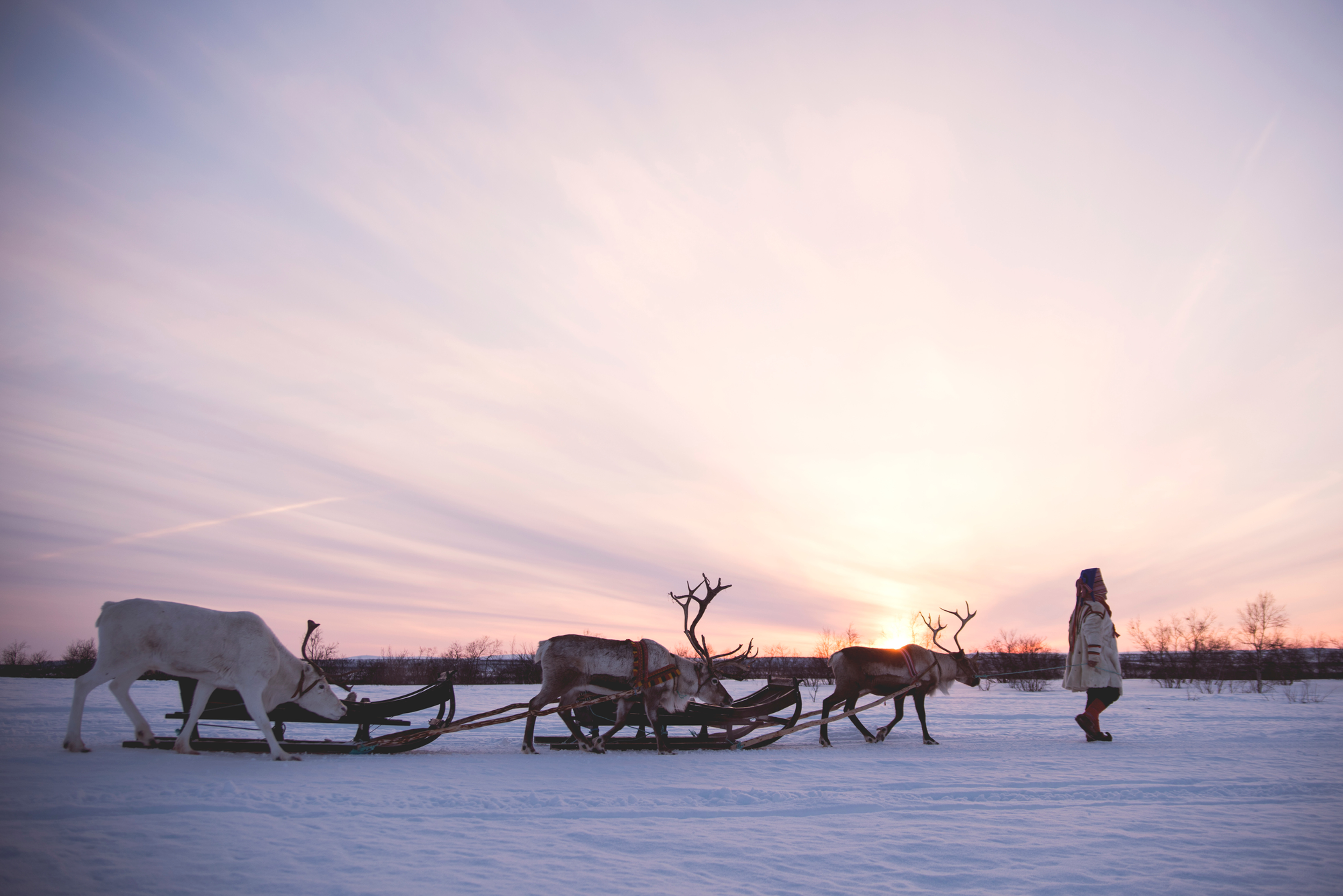 Day tour with our reindeer: