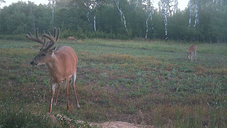 Does an Easy Winter Mean Smaller Antlers?