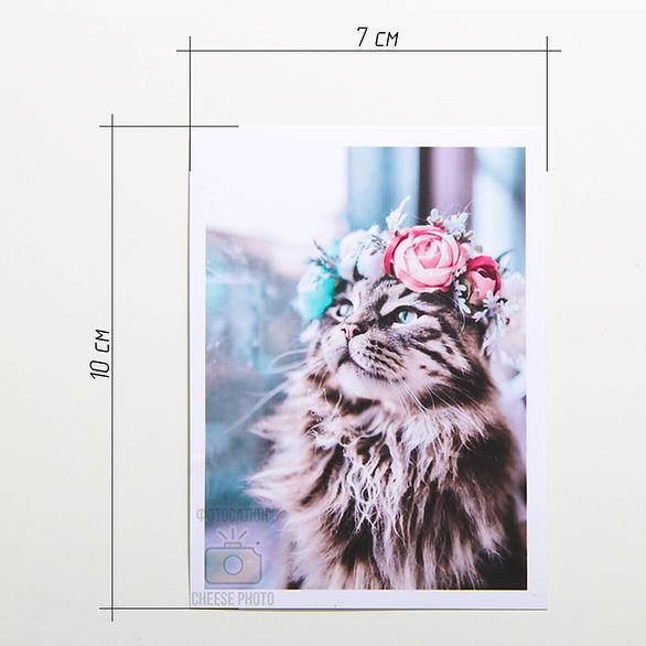size-polar-frame.jpg