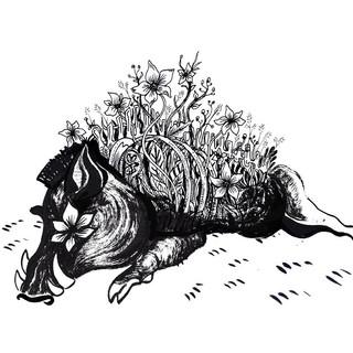 our wild boar artwork: Harriet Bruce