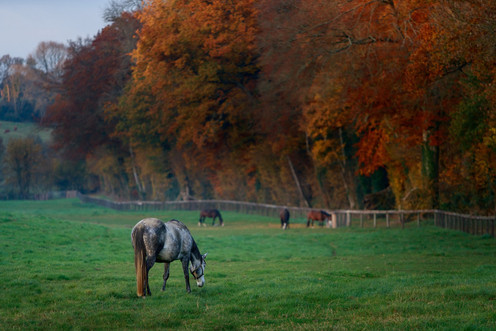Mares in the field