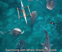 Swimming-with-Whale-Sharks-in-Oslob.png