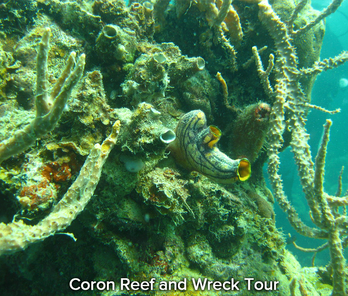 Coron-Reef-and-Wreck-Tour-35.png