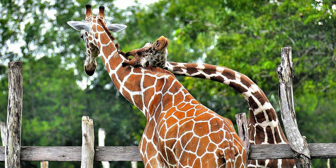 coron calauit safari tour
