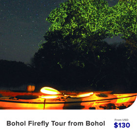 Bohol-Firefly-Tosur-from-Bohol.jpg